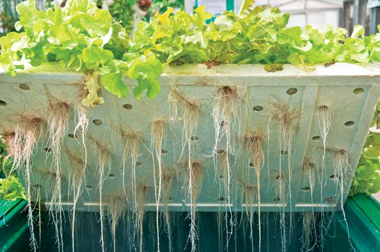 Aquaponics Research Project Launched To Boost Rwandan Food Security